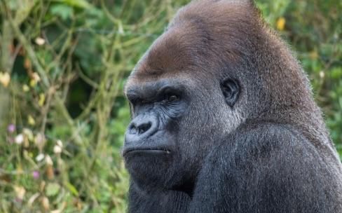 Du Gorilla Glass 4 sur les smartphones 2015