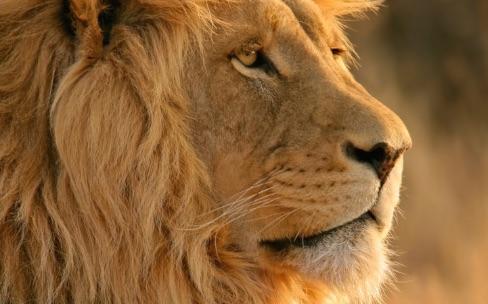 Apple ne supporterait plus Mac OS X Lion et OS X Mountain Lion