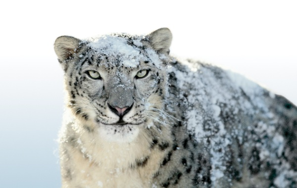 Ressusciter Snow Leopard sur un hackintosh