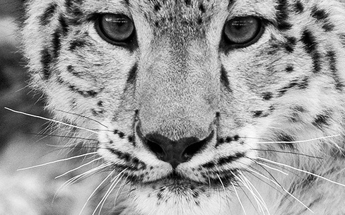 Snow Leopard ne synchronise pas les appareils mobiles sous iOS 9
