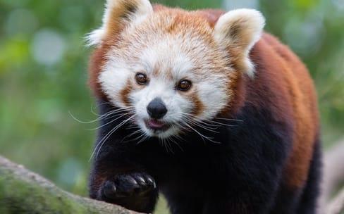 Firefox sort ses griffes pour enrayer Chrome