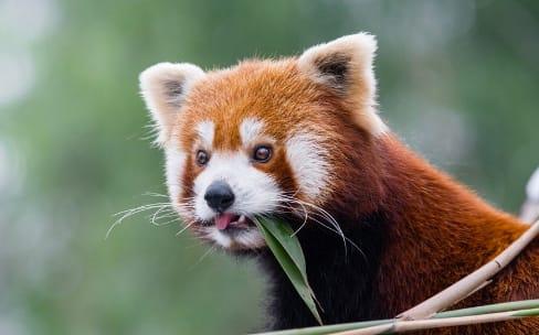 Firefox 57: la version du renouvellement