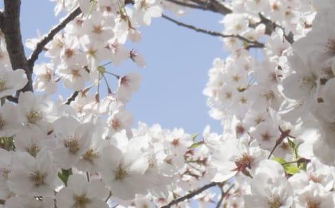 Cherry Blossom: le programme de la CIA pour infiltrer des routeurs