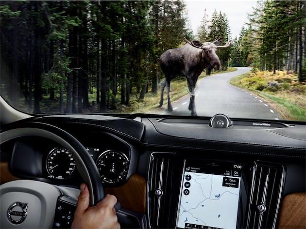 le kangourou pose problème aux voitures autonomes | macgeneration