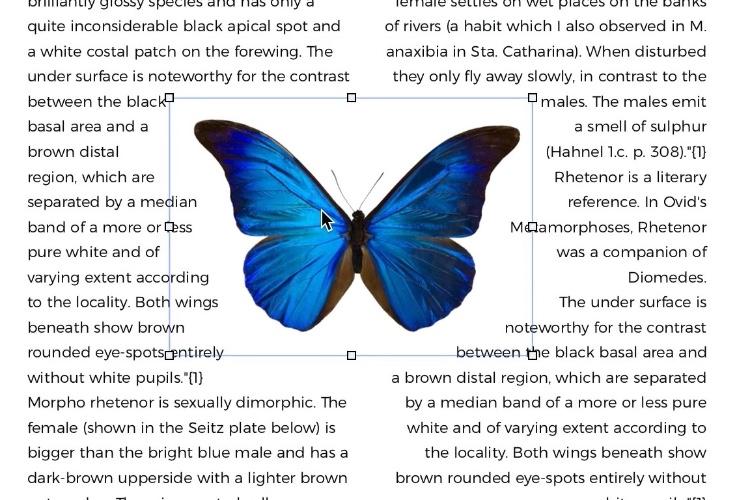 Sparkle2.5 entoure les images avec le texte